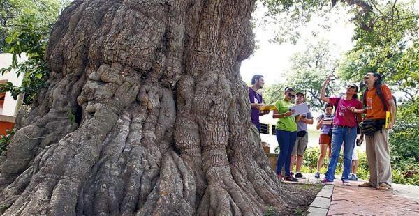 árboles Zoológico Municipal Noel Kempff Mercado